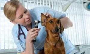 ветеринарная клиника как бизнес
